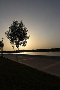 IMG_6988_Eastern Mangroves_002